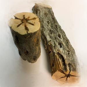 troncos terrario